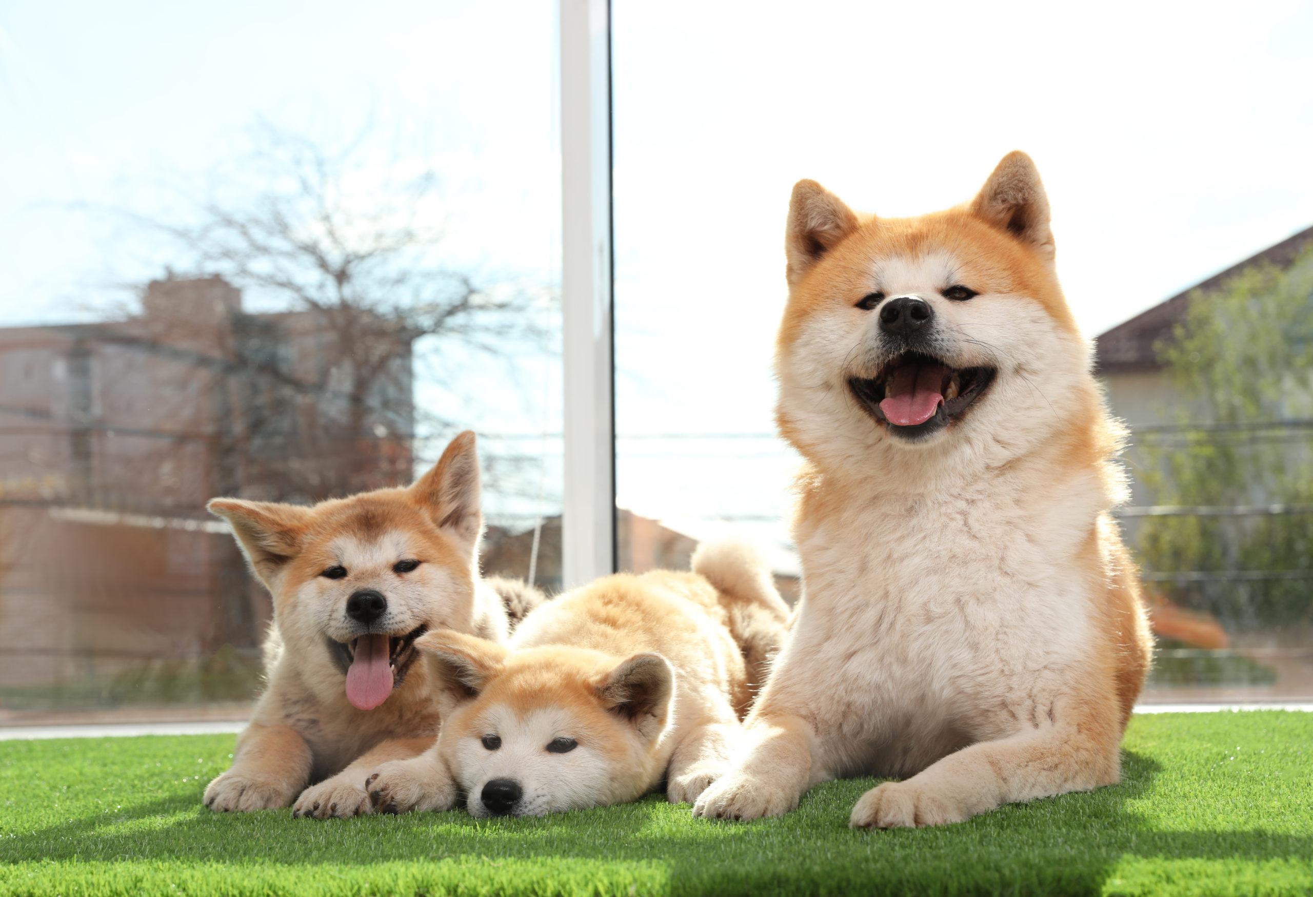 Szép pázsit kutya mellett is?